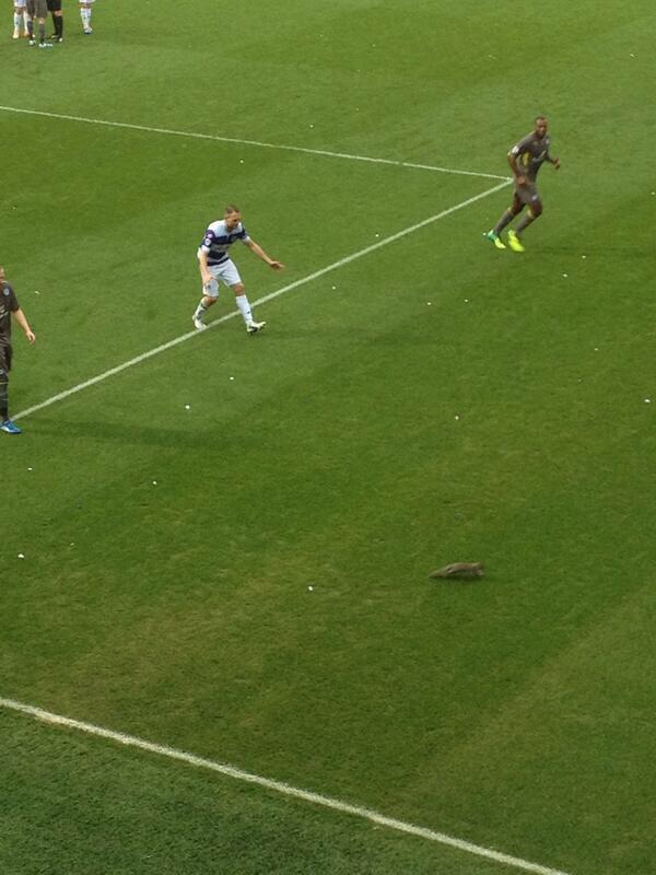 QPR Squirrel