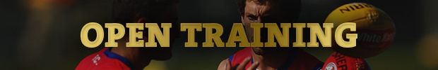 Dogs Open Training